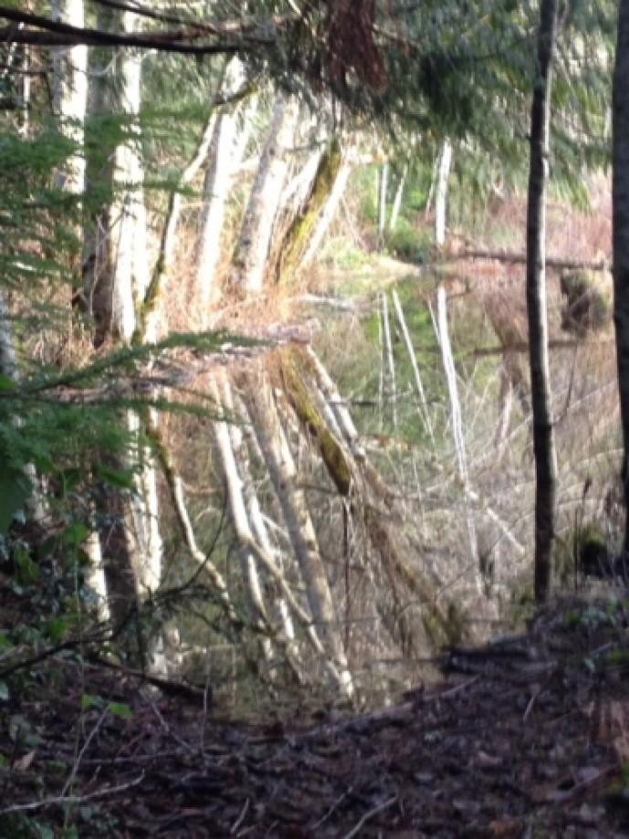 Trip photo #4/4 The beaver-flooded section of trail looking back to the east.