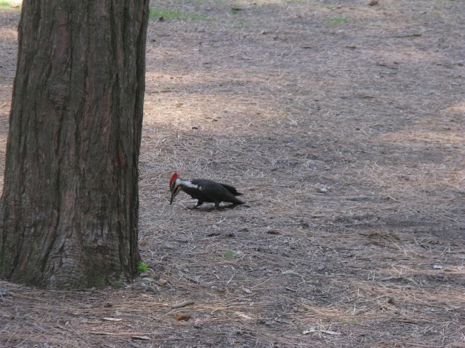 Trip photo #32/32 Woodpecker back at camp