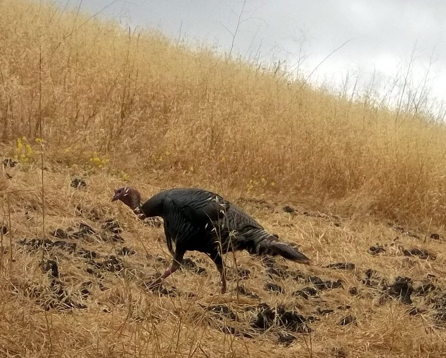 Trip photo #9/9 Turkey along Stagecoach