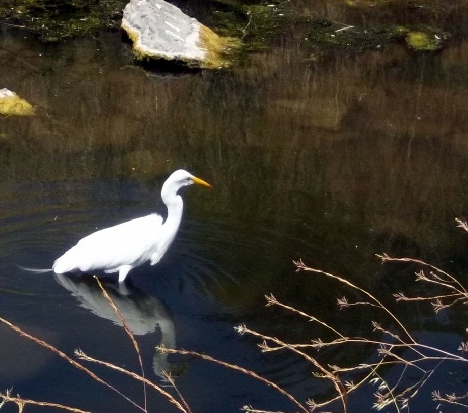 Trip photo #5/7 Egret by Iron Horse trail