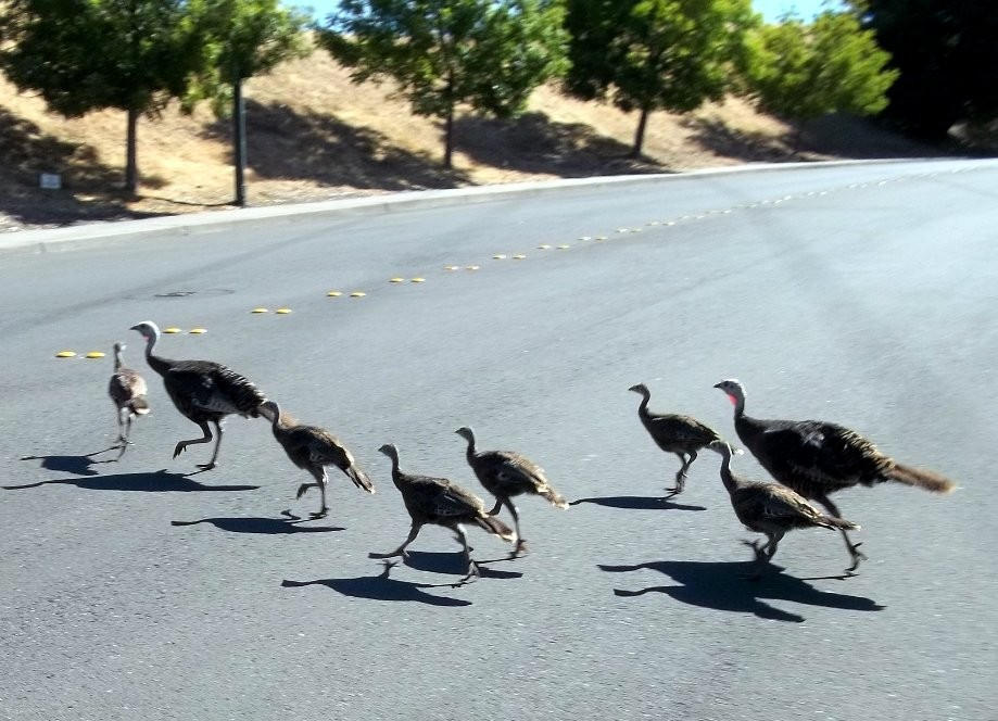 Trip photo #3/10 Turkeys on Rudgear