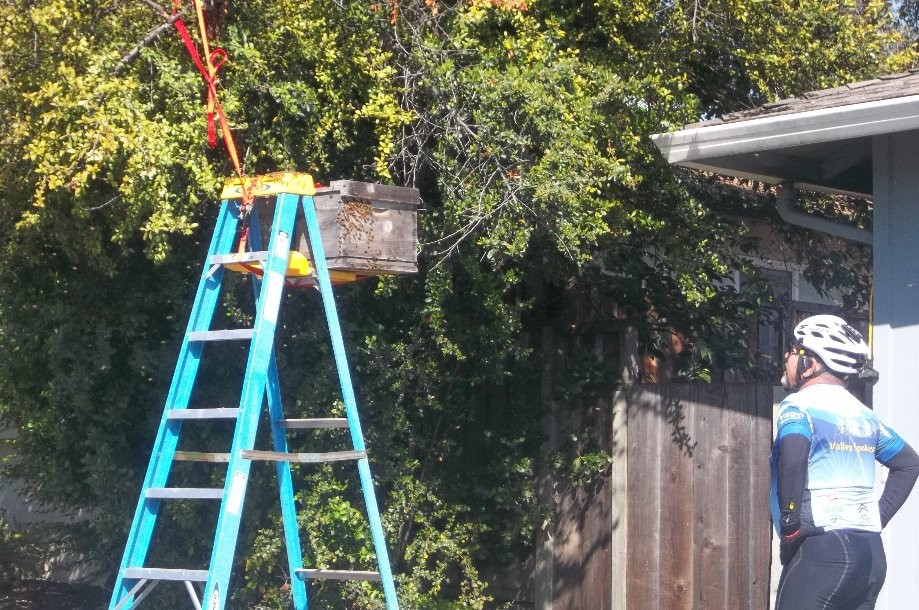 Trip photo #2/8 Bee hive relocation in progress