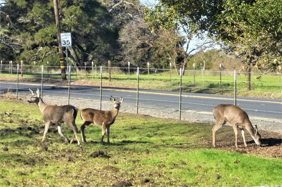 Trip photo #5/15 Deer at Highland & Carneal