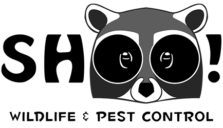 Colorado's Top Rated Local® Pest Control Company Award Winner: ShOO! Wildlife and Pest Control