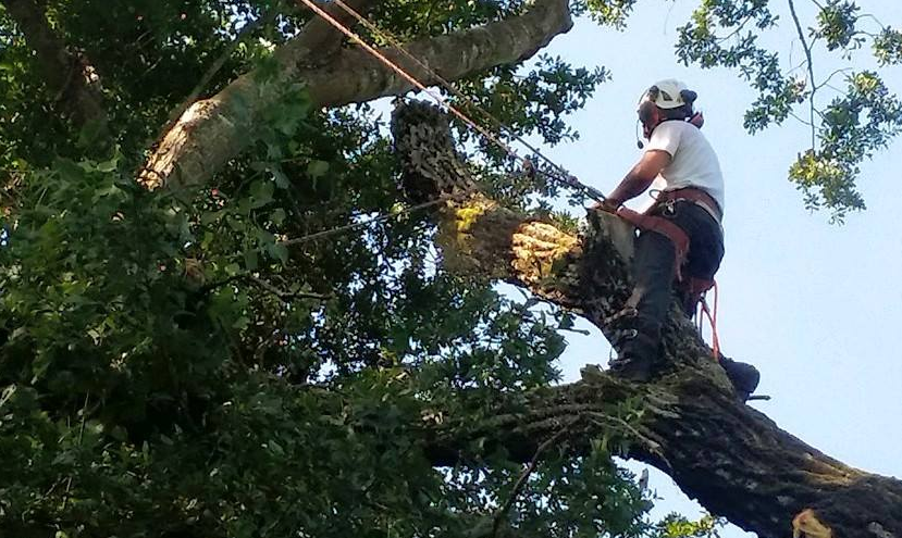 Texas' Top Rated Local® Tree Care Companies Award Winner: All About Trees