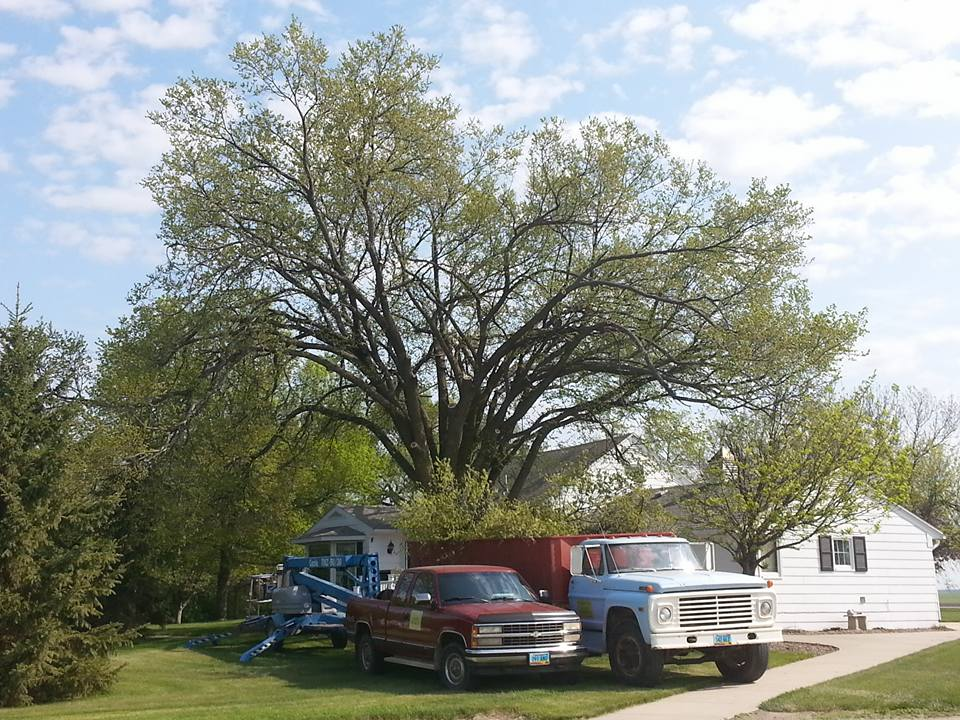 North Dakota's Top Rated Local® Tree Care Companies Award Winner: Ground to Sky LLC