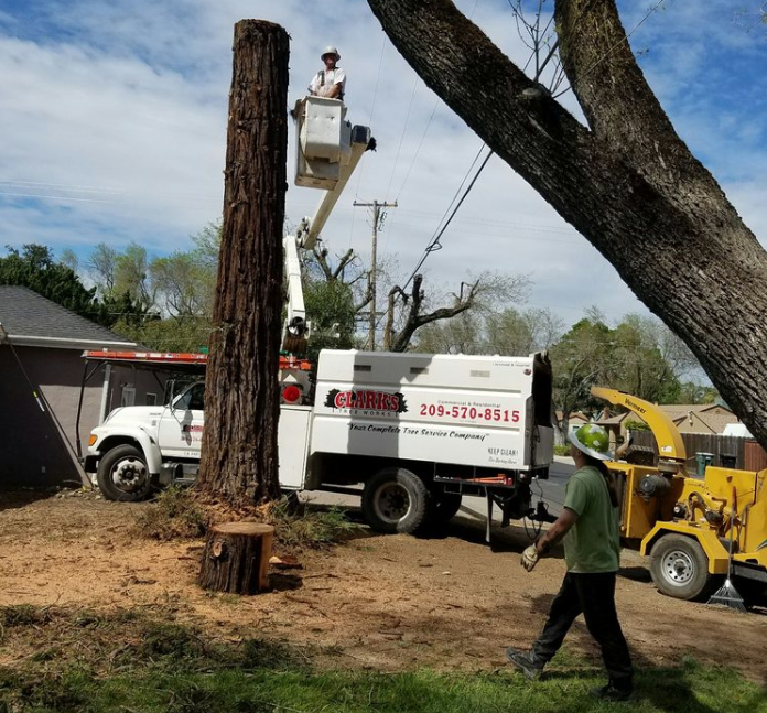 California's Top Rated Local® Tree Care Company Award Winner: Clark's Tree Works