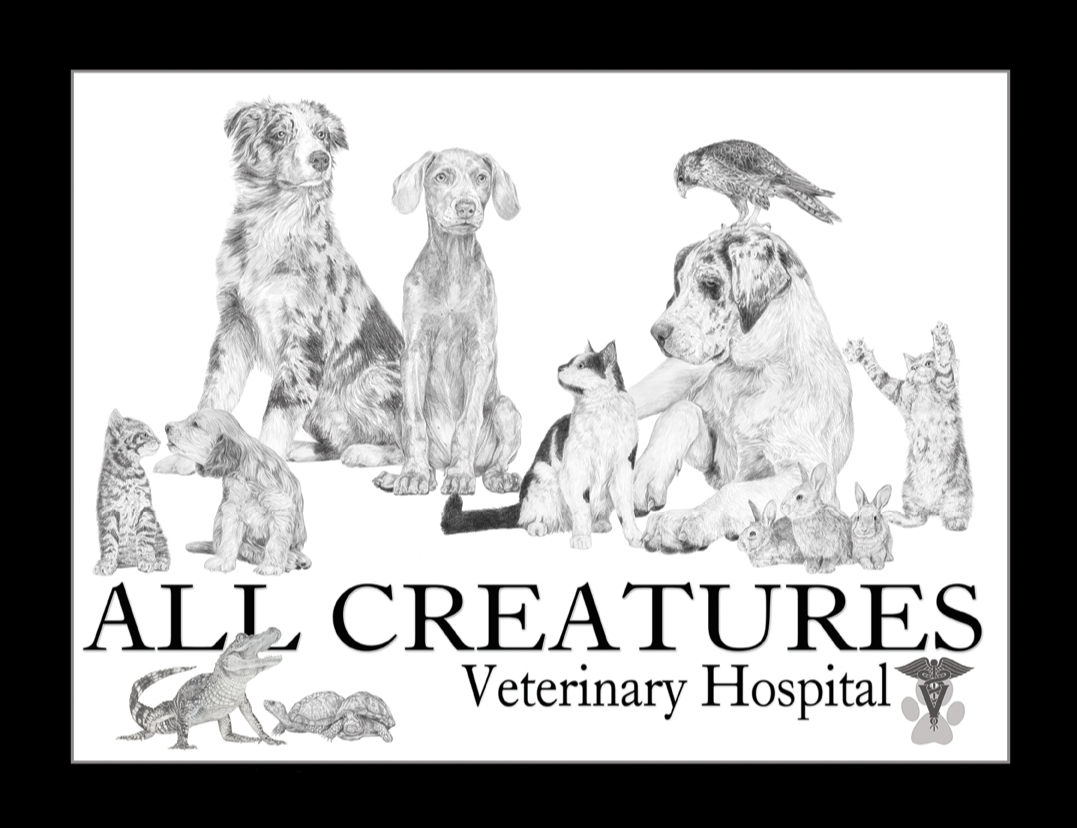 South Dakota's Top Rated Local® Veterinarians Award Winner: All Creatures Veterinary Hospital