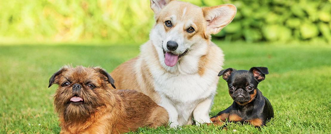Michigan's Top Rated Local® Pet Groomers Award Winner: Splish Splash Pet Wash