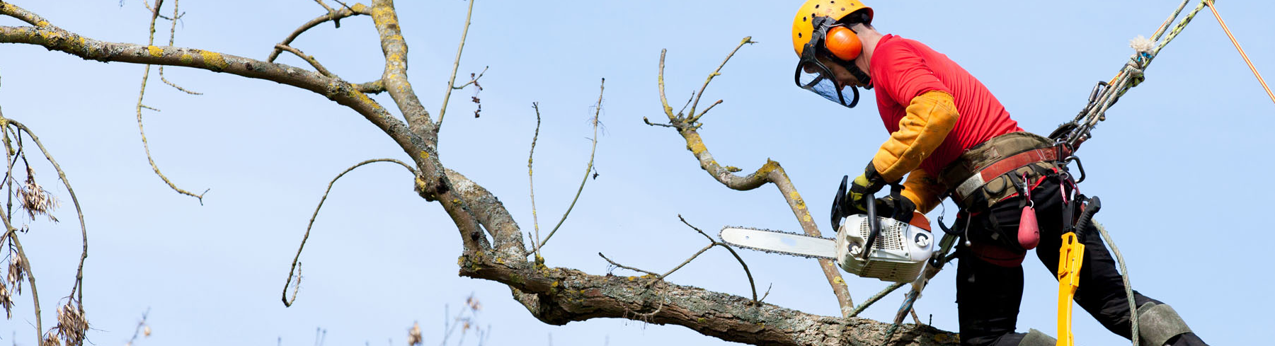 South Carolina's Top Rated Local® Tree Care Companies Award Winner: New Leaf Tree Service