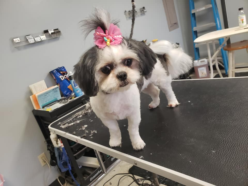 Delaware's Top Rated Local® Pet Groomers Award Winner: Dirty Dog Grooming Salon
