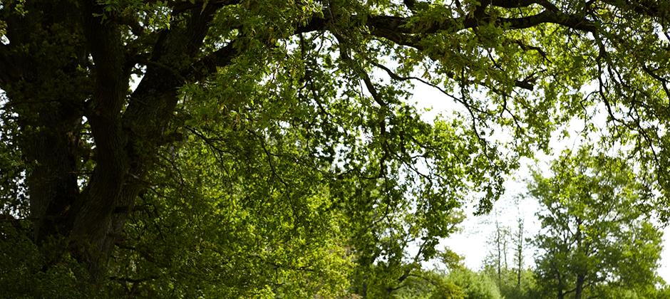 Louisiana's Top Rated Local® Tree Care Companies Award Winner: Louisiana Tree Service, Inc.