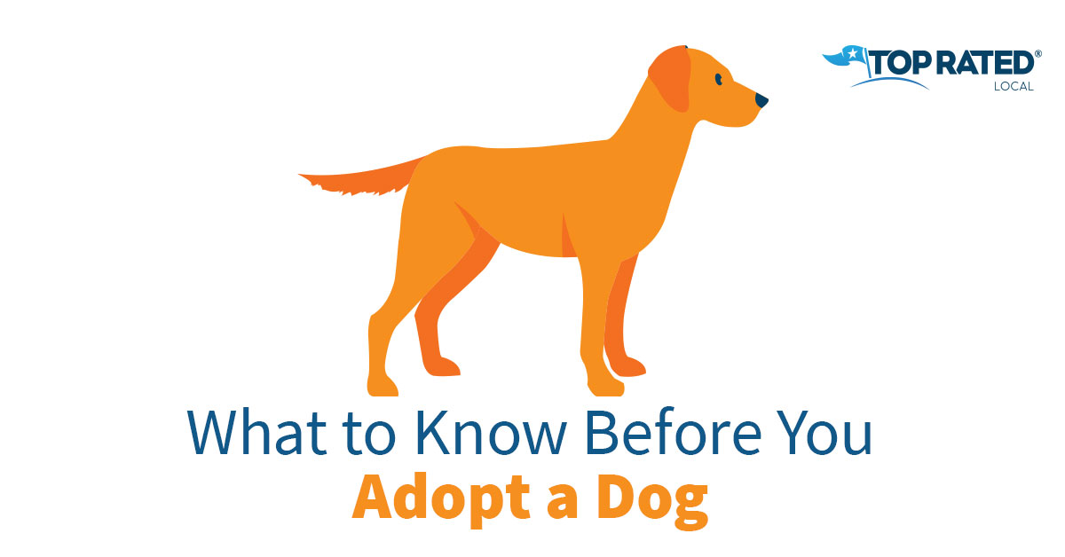 What to Know Before You Adopt a Dog