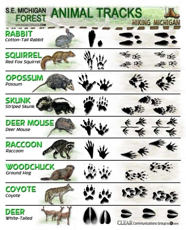Animal Tracks - knowledgeweighsnothing.com
