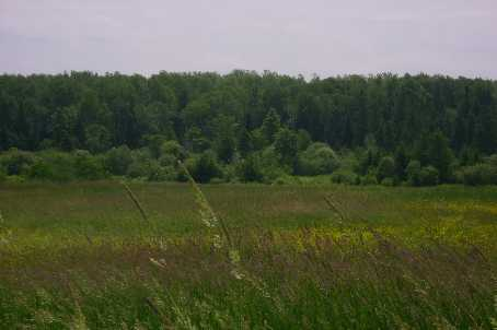 Vacant Land at 1570B East Rd, Part 1 Rd, Muskoka Lakes, Ontario. Image 5