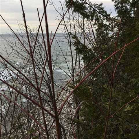 Vacant Land at 1619 Chief Joseph Snake Rd, Georgina Islands, Ontario. Image 4