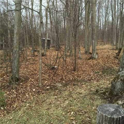 Vacant Land at 1619 Chief Joseph Snake Rd, Georgina Islands, Ontario. Image 5