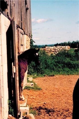 Farm at 5768 8th Line S, Essa, Ontario. Image 10