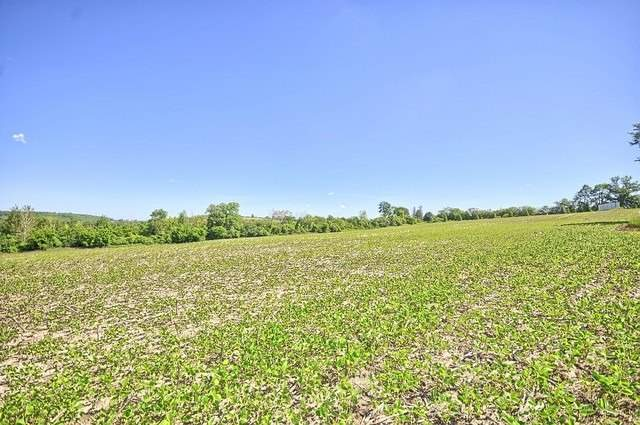 Vacant Land at Con 4 Part Lot 2 Rd, Brock, Ontario. Image 16