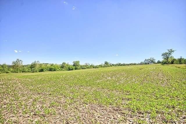 Vacant Land at Con 4 Part Lot 2 Rd, Brock, Ontario. Image 18