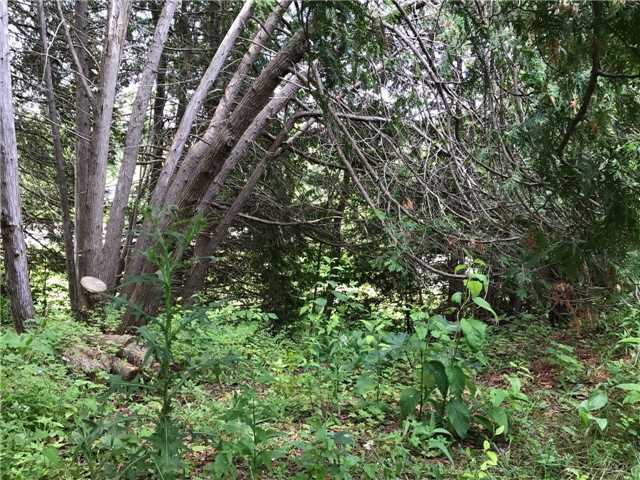 Vacant Land at 3 Kindlers Rd, New Tecumseth, Ontario. Image 2