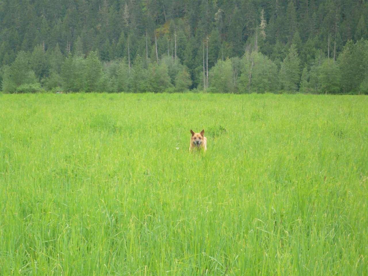Vacant Land at 9651 PEMBERTON MEADOWS, Pemberton, British Columbia. Image 4