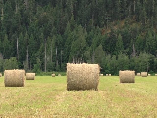 Vacant Land at 9651 PEMBERTON MEADOWS, Pemberton, British Columbia. Image 10