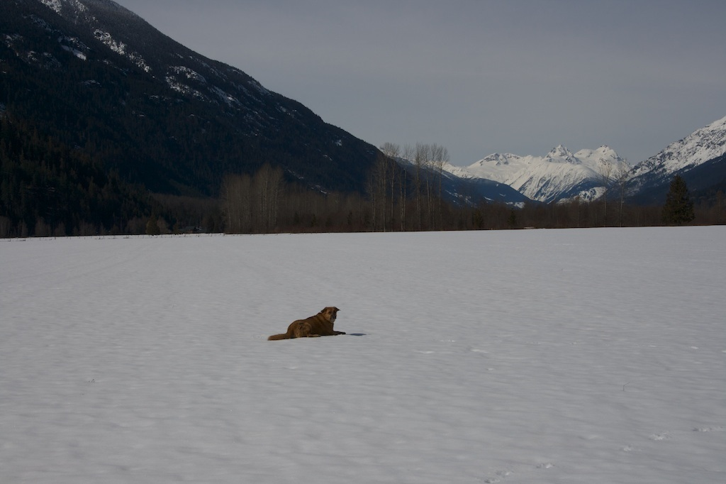 Vacant Land at 9651 PEMBERTON MEADOWS, Pemberton, British Columbia. Image 12