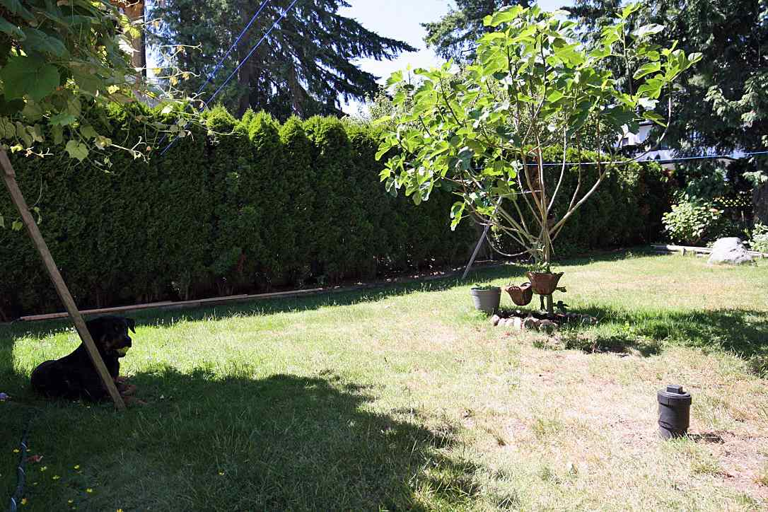 Detached at 13255 15A AVENUE, South Surrey White Rock, British Columbia. Image 12