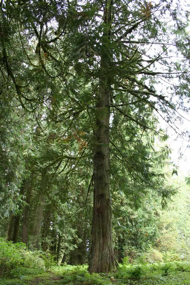 Vacant Land at 6900 HINKLEY ROAD, Chilliwack, British Columbia. Image 10