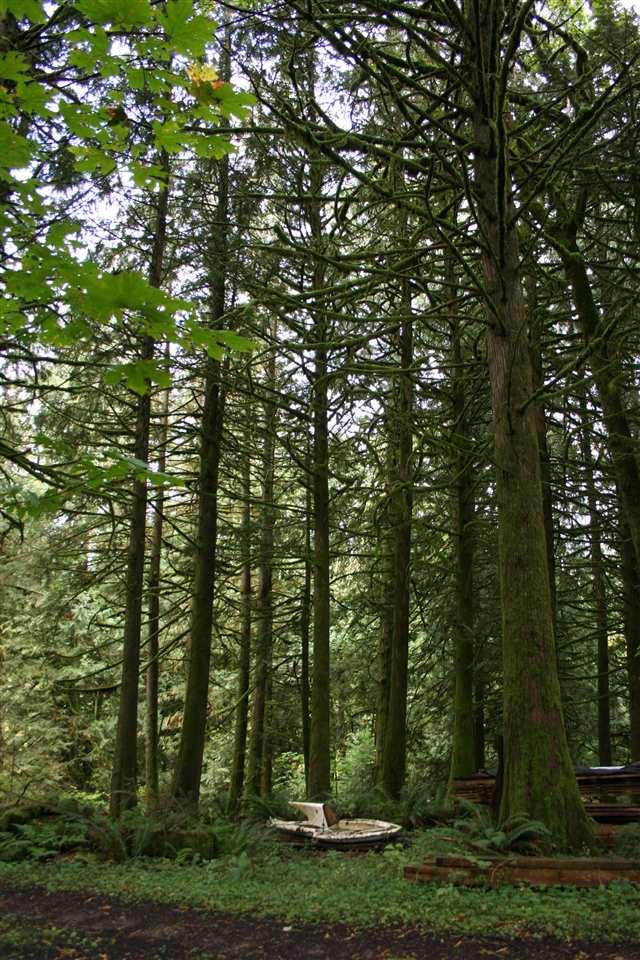 Vacant Land at 6900 HINKLEY ROAD, Chilliwack, British Columbia. Image 11