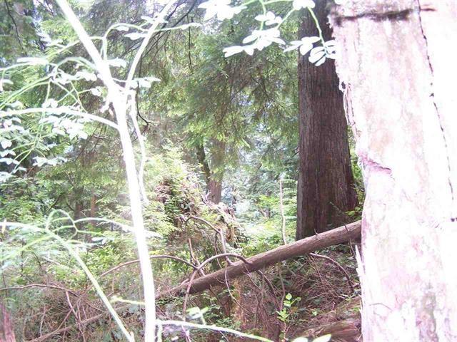 Vacant Land at #7 COLDWELL BEACH, North Vancouver, British Columbia. Image 5