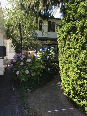 Half-duplex at 3380 BLUNDELL ROAD, Richmond, British Columbia. Image 4