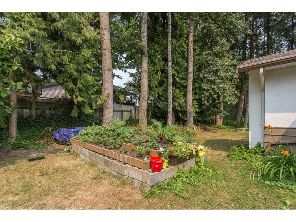Detached at 3143 LEFEUVRE ROAD, Abbotsford, British Columbia. Image 19