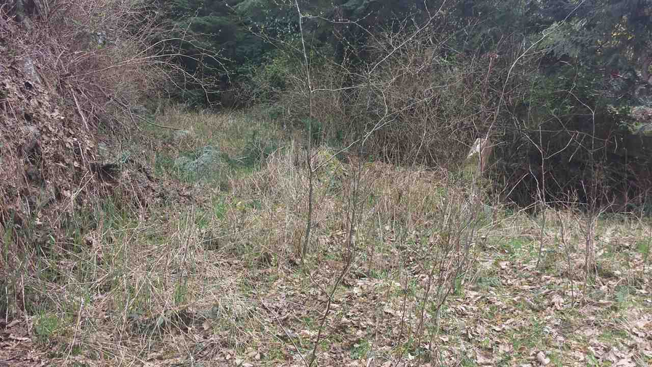 Vacant Land at 1269 ADAMS ROAD, Bowen Island, British Columbia. Image 3