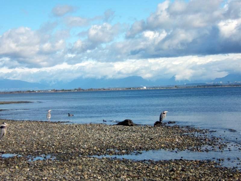 Detached at 286 66A STREET, Tsawwassen, British Columbia. Image 16