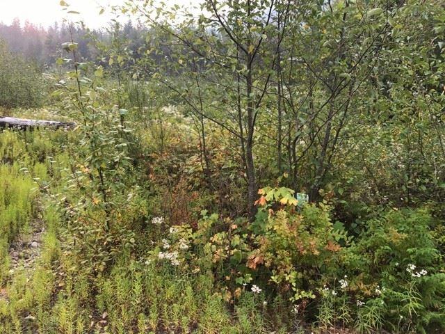Vacant Land at 1119 COPPER DRIVE, Squamish, British Columbia. Image 4