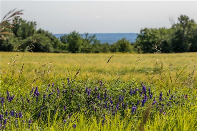 Vacant Land at 3767 5 Nottawasaga Conces Rd S, Clearview, Ontario. Image 3