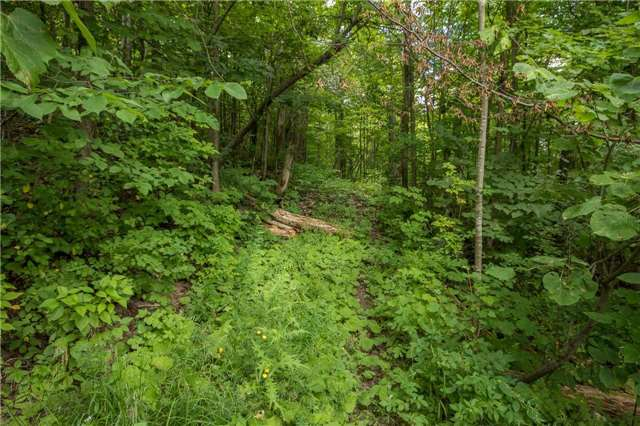 Vacant Land at 3767 5 Nottawasaga Conces Rd S, Clearview, Ontario. Image 5