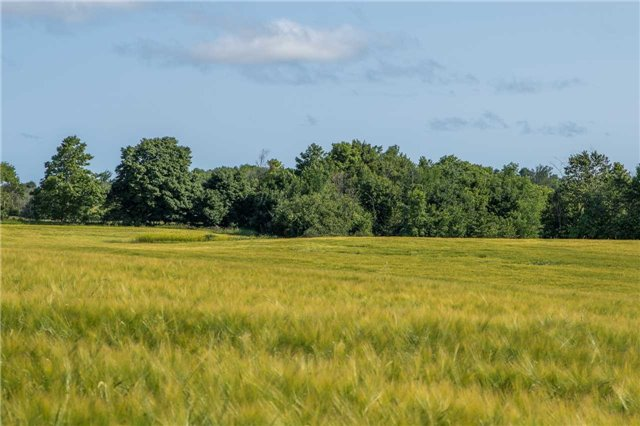 Vacant Land at 3767 5 Nottawasaga Conces Rd S, Clearview, Ontario. Image 7