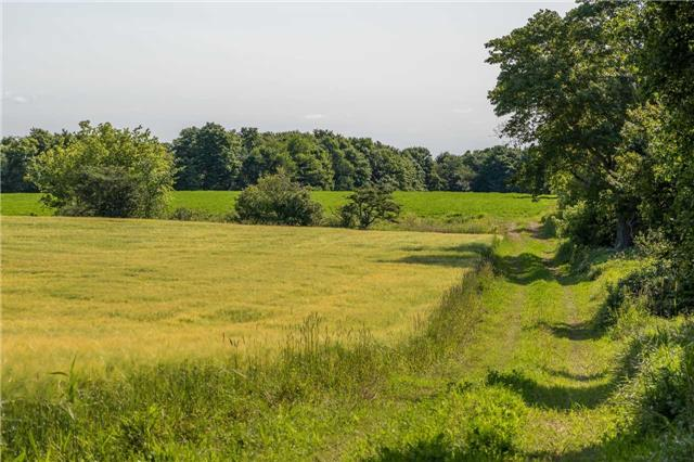 Vacant Land at 3767 5 Nottawasaga Conces Rd S, Clearview, Ontario. Image 8