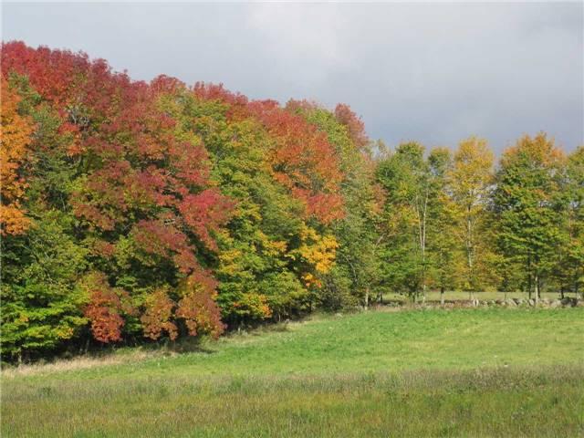 Farm at 1614 Horseshoe Valley Rd E, Oro-Medonte, Ontario. Image 14