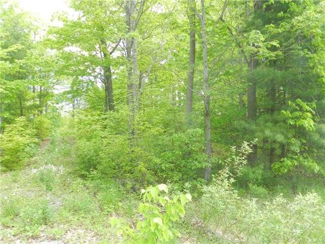 Vacant Land at 27 Koetsier Lane, Georgian Bay, Ontario. Image 8