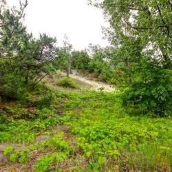 Vacant Land at 31 Trew Ave, Tiny, Ontario. Image 3