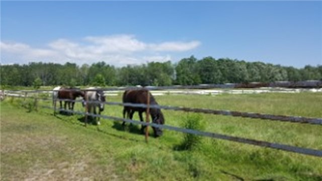 Farm at 1267 Upper Big Chute Rd, Severn, Ontario. Image 17