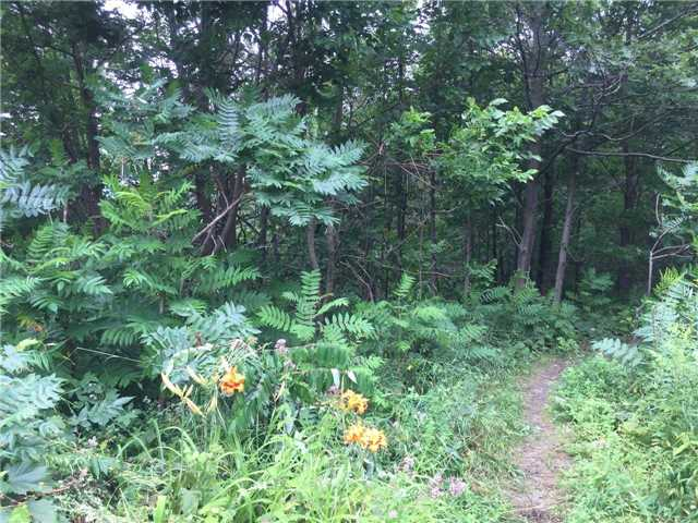 Vacant Land at 11 Pine Point, Oro-Medonte, Ontario. Image 3