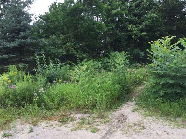 Vacant Land at 11 Pine Point, Oro-Medonte, Ontario. Image 4