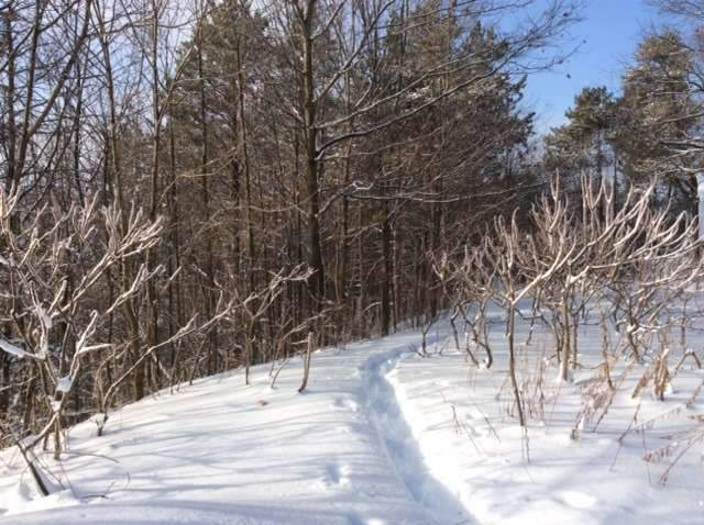 Vacant Land at 11 Pine Point, Oro-Medonte, Ontario. Image 5