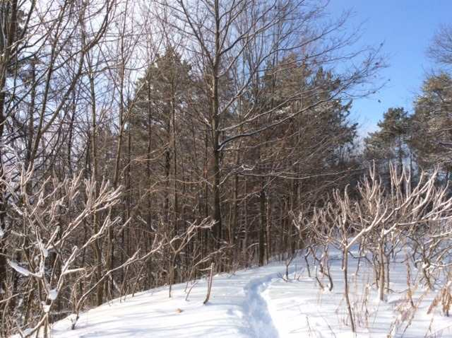 Vacant Land at 11 Pine Point, Oro-Medonte, Ontario. Image 6