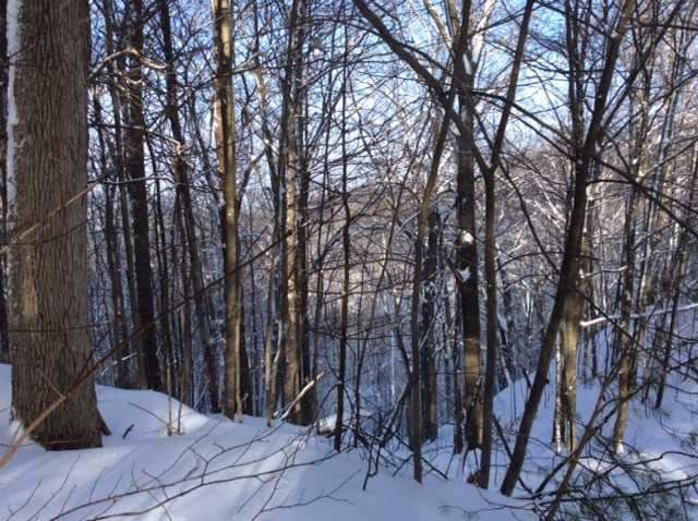 Vacant Land at 11 Pine Point, Oro-Medonte, Ontario. Image 7
